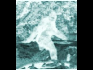 Bigfoot, Multiple Sightings & Eyewitnesses - Minerva Monster, Beast of Whitehall