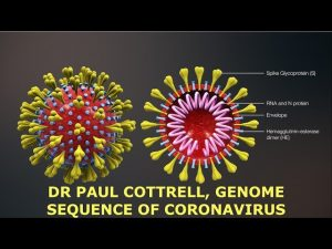 Bioweapon? Ph.D. Explains Coronavirus & It's Genome Sequence, Dr Paul Cottrell